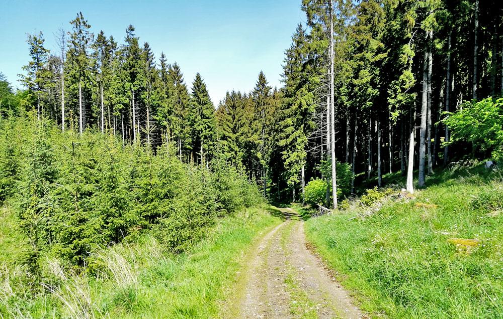 Adelshærens vej ned til Aldalen. hvor Mortens barndomshjem, træskomagerhuset, lå til venstre inde i skoven. Foto: Stefan Katic