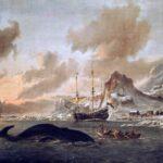 Hvaler udgjorde en væsentlig ressource for Danmark-Norge. I kølvandet af jagten på Mendozas opbragtes også baskiske hvalfangere med op mod 2000 tønder tran lavet af hvalernes spæk, som blandt andet blev brugt til lampeolie, som var en svært efterspurgt vare. Her foregår hvaljagten ved Spitsbergen, Svalbard.